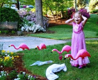 Flamingos Arrive